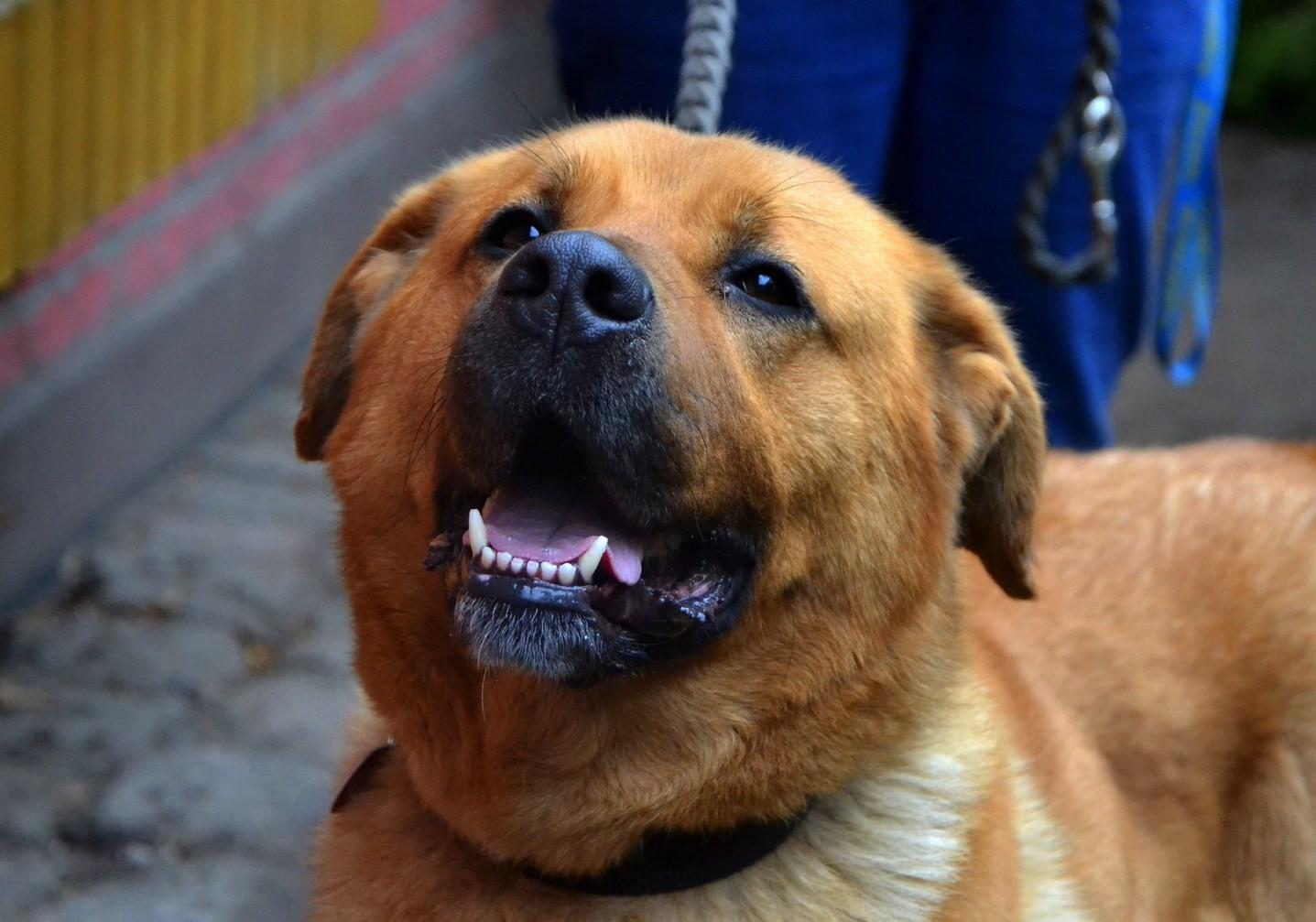Podczas interwencji zdołaliśmy uratować wyjątkowo zaniedbane psy.